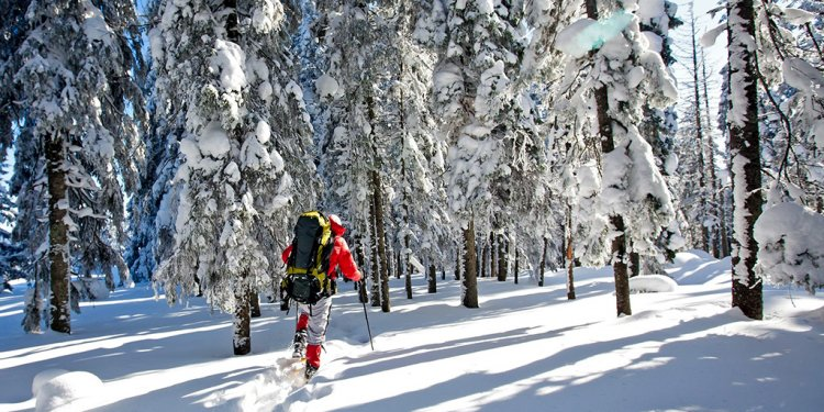 7 Awesome Snowshoe Trails in