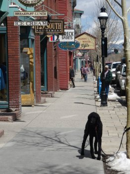 A very well-behaved dog patiently waits for his owner on Main Street.